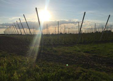 Zmiany na plantacji w Jastkowie