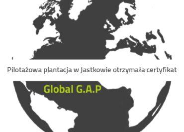 CERTYFIKAT GLOBAL G.A.P., przyznany pilotażowej plantacji Polskiego Eko Chmielu w Jastkowie.